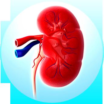 Pathophysiology of acute kidney injury